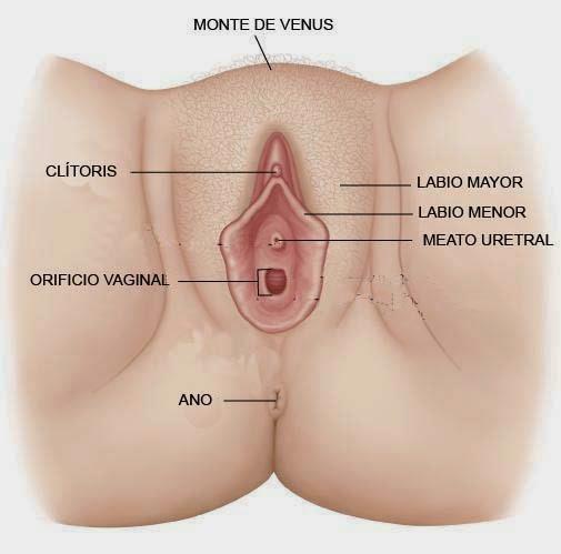 Female uses large dildo on video